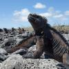 ガラパゴス諸島発クラウドに降り立つ